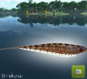 Рыба нож полосатая