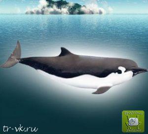 Лопатозубый кит