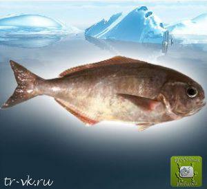 Рыба тряпка