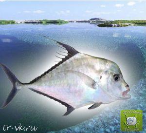 Индийская рыба нить