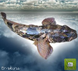 Бычок мартовик