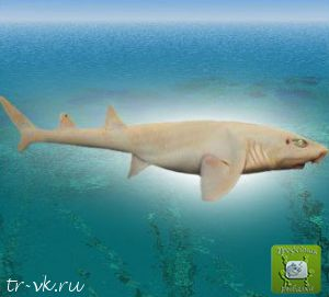 Акула призрак