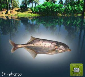 Клюворылая рыба