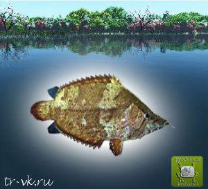Рыба лист